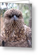 Brown Hawk Face Profile Greeting Card