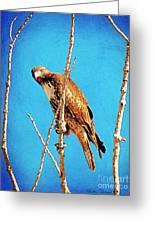 Hawk In A Glow Greeting Card