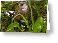 Hawk In The Grass Greeting Card