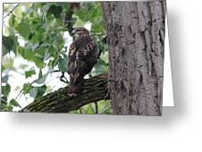 Hawk On Alert Greeting Card