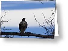 Hawk On Branch Greeting Card