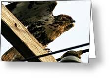 Hawk On Telephone Pole Greeting Card