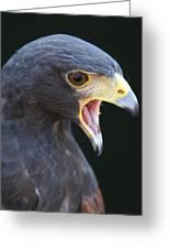 Hawk Portrait Greeting Card