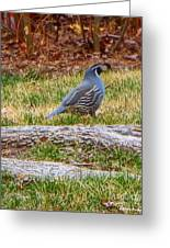 Quail Scout Greeting Card