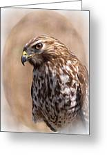 Hawk - Sphere - Bird Greeting Card