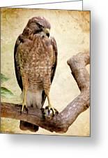 Hawk With Fish Greeting Card