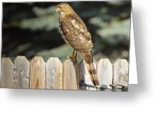 Hawk1 Greeting Card