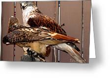 Hawks Greeting Card