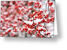 Hawthorn Berries Greeting Card
