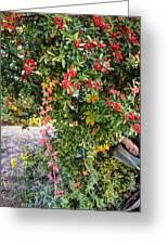Hawthorn Berry Greeting Card