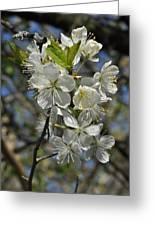 Hawthorn Flowers Greeting Card