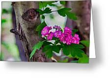 Hawthorn Romance Greeting Card