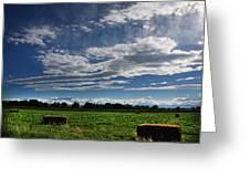 Hay Bales Greeting Card