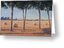 Hay Bales And Pines, Pienza, 2012 Acrylic On Canvas Greeting Card
