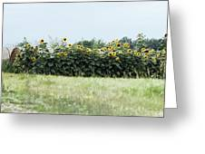 Hay Bales And Sunflowers Greeting Card