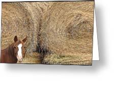 Hay Horse Greeting Card