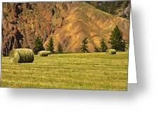 Hay Rolls  Greeting Card
