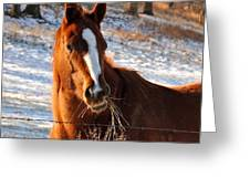 Hay There Greeting Card