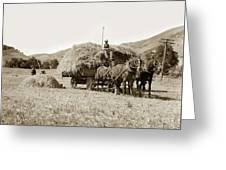 Horse-drawn Hay Wagon Carmel Valley California Circa 1905 Greeting Card