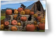 Haycats N' Pumpkins Greeting Card