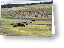 Hayden Valley Bison Herd In Yellowstone National Park Greeting Card