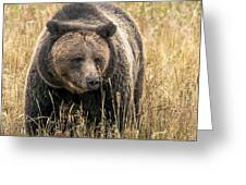 Hayden Valley Sow In Tall Grass Greeting Card