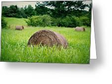 Hayroll Field Greeting Card