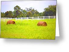Hayrolls And Fences Greeting Card