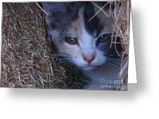 Haystack Cat Greeting Card
