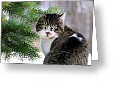Hazel Eyes And Pine Greeting Card by Christina Rollo