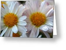 Hazy Day Daisies  Greeting Card