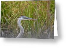 Hazy Day Heron Greeting Card