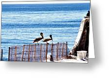 hd 383 hdr - Two Pelicans Greeting Card