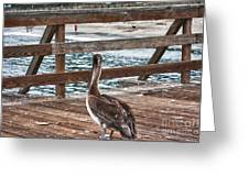 hd 392 hdr - Pelican On The Pier Greeting Card