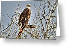 Hdr Bald Eagle Greeting Card