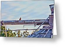 Hdr Bird On A Pipeline II Greeting Card