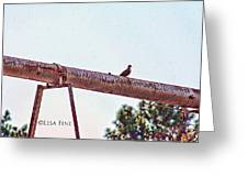 Hdr Dove On A Pipe Greeting Card