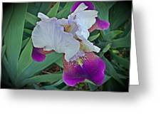 Hdr Iris Greeting Card
