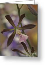 He Pua Ke Aloha - The Flower Of Love - Orchidea Tropicale Greeting Card