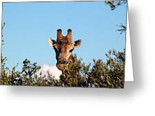 Head Above The Rest Greeting Card