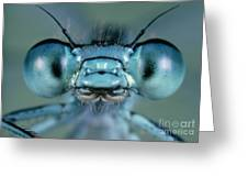 Head And Compound Eyes Of Damselfly Greeting Card