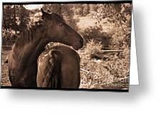 Head And Tail Greeting Card