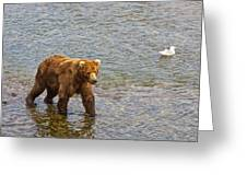 Head Grizzly Bear And Sea Gull In Moraine River In Katmai Np-ak  Greeting Card