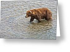 Head Grizzly Bear With Intense Fishing  Focus For Salmon In Moraine River In Katmai Np-ak Greeting Card