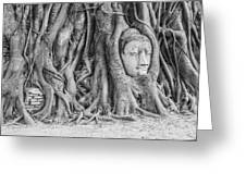 Head Of Sandstone Buddha  Greeting Card