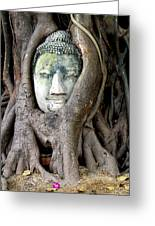Head Of The Sandstone Buddha Greeting Card