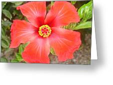 Head On Shot Of A Red Tropical Hibiscus Flower Greeting Card
