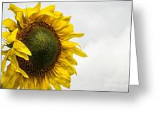 Head Up To The Rains - Sunflower Greeting Card