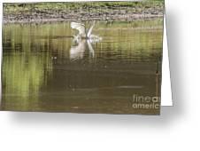 Headless Snowy Egret Of Rum Creek Greeting Card