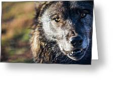 Headshot Of Wolf, Rapid City, South Greeting Card